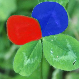 Kleeblätter-Modul-1-2-rot-und-blau_Artikelbild-300x300